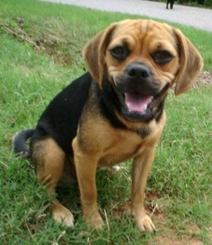 Bully Breed Humane Society » Blog Archive » Pie